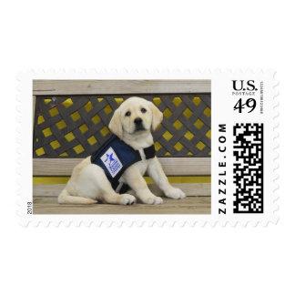 Leigh Ann stamp