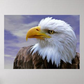 Leinwanddruck Leinwand  Canvas Print  Adler