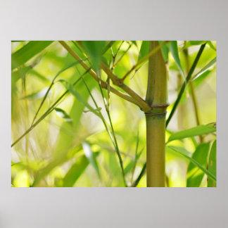 Leinwanddruck Leinwand  Canvas Print   Bambus
