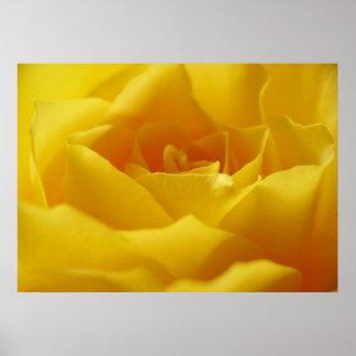 Leinwanddruck Leinwand  Canvas Print Rose