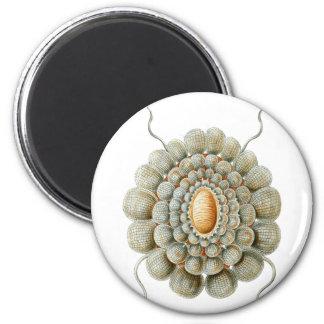 Leiosoma 2 Inch Round Magnet