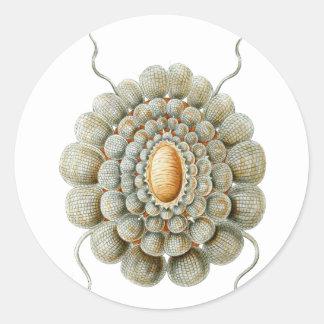Leiosoma Classic Round Sticker