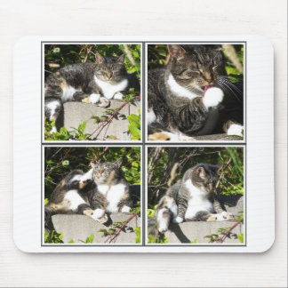 Leisure Time Of A Cat Collage Mousepad