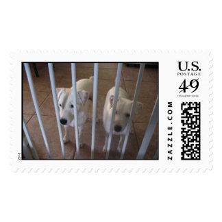 Lelia & Bet Postage