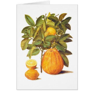 Lemon and Grapefruit Card