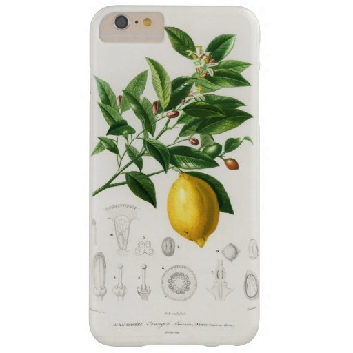 Lemon Citrus Fruit Botanical Limonium Illustration Barely There iPhone 6 Plus Case