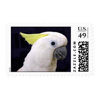 Lemon Crested Cockatoo (Medium) Stamps