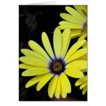 Lemon Daisies Valentine Card