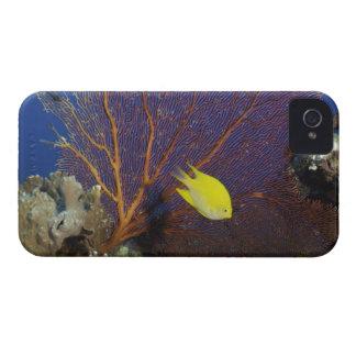 Lemon damsel Case-Mate iPhone 4 case