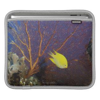 Lemon damsel iPad sleeve