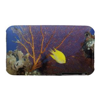 Lemon damsel iPhone 3 case