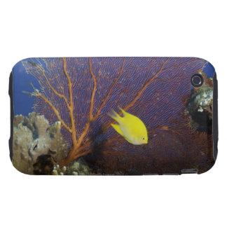 Lemon damsel tough iPhone 3 case