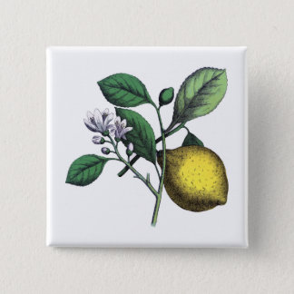 "Lemon, ""fruit and flower"" pinback button"