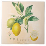 """Lemon Fruit Ceramic Accent Tile, Kitchen Decor Ceramic Tile<br><div class=""""desc"""">Ceramic Accent Tile Lemon Fruit and Blossoms 6 x 6 inch sturdy glossy ceramic tile features Lemon fruit and blossom with French text from vintage French botanical texts. Perfect accent for a French Country Kitchen or Farmhouse Kitchen.</div>"""