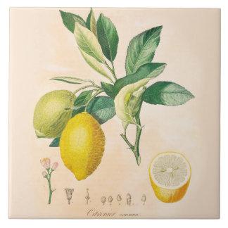 Lemon Fruit Ceramic Accent Tile, Kitchen Decor Ceramic Tile