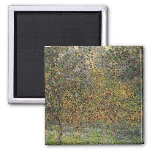 Lemon Grove en Bordighera de Claude Monet Imán Cuadrado