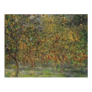 Lemon Grove en Bordighera de Claude Monet Tarjetas Postales