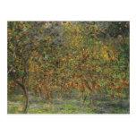 Lemon Grove in Bordighera by Claude Monet Postcard