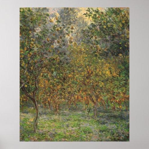 Lemon Grove in Bordighera by Claude Monet Poster