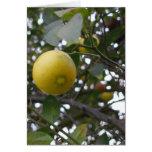 Lemon on a tree cards