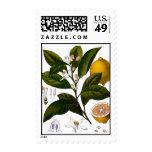 Lemon Postage Stamp