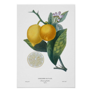 Lemon Poster