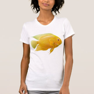 Lemon Severum Cichlid Scoop Neck Tee Shirt