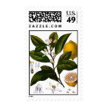 Lemon Stamps