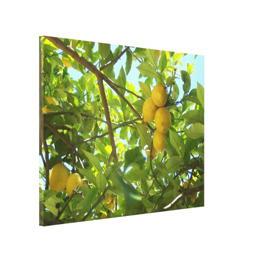 LEMON TREE CANVAS CANVAS PRINT