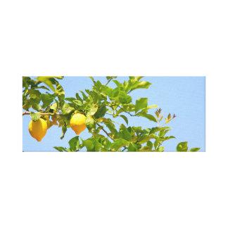 lemon tree canvas print