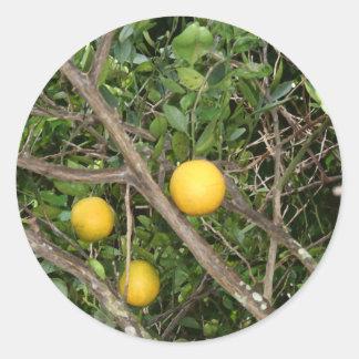 Lemon Tree Classic Round Sticker