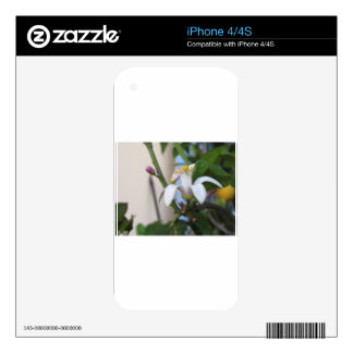 Lemon tree flower and leaves decal for iPhone 4