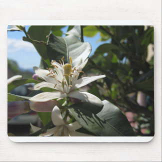 Lemon tree flowers with green leaves in background mouse pad