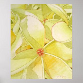 Lemon Yellow Frangipani Poster