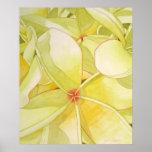 Lemon Yellow Frangipani Posters