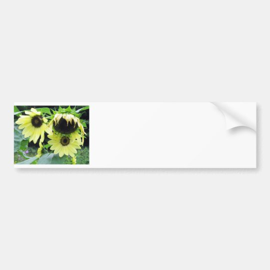Lemon Yellow Sunflowers Bumper Sticker