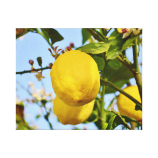 Lemons growing in the sun canvas print