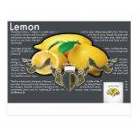 Lemons Postcard Cartão Postal