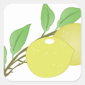 Lemons Square Sticker