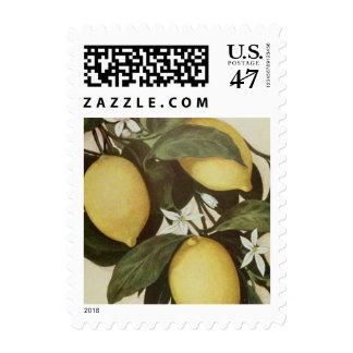 Lemons stamp