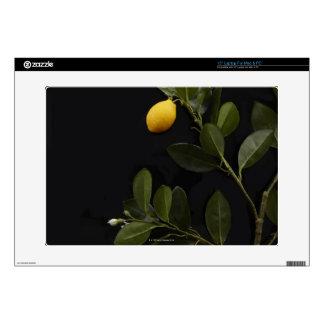 "Lemons still on their Branch 15"" Laptop Decal"