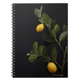 Lemons still on their Branch Notebooks