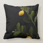 Lemons still on their Branch Pillow