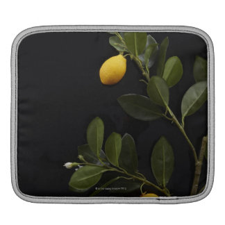 Lemons still on their Branch Sleeve For iPads