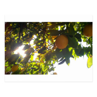 lemons sun postcard