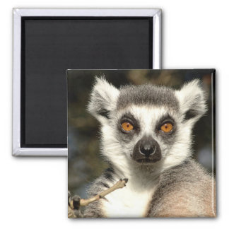 Lemur2 Magnet