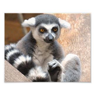 Lemur adorable fotos