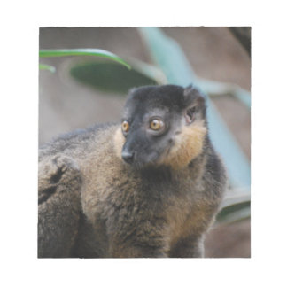 Lemur agarrado lindo bloc