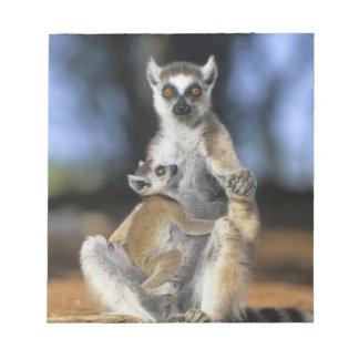 Lemur Anillo-atado, (catta del Lemur), madre y Libreta Para Notas