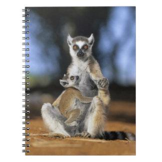Lemur Anillo-atado, (catta del Lemur), madre y Cuaderno